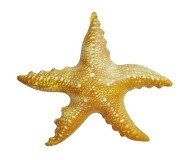 Jet Creations Inflatable Aquatic Animals, Starfish, 20 Inches Long